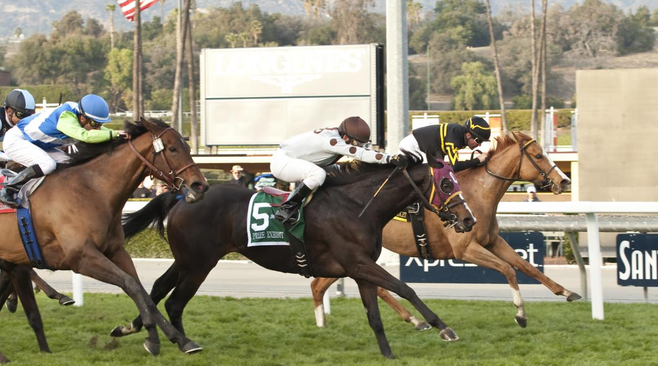 In this photo provided by Benoit Photo, DP Racing's Prize Exhibit and jockey Santiago Gonzalez, right, hold off Shrinking Violet, center, and Ageless, left, to win the Gr. II, $200,000 Monrovia Stakes, Sunday, Jan. 3, 2016 at Santa Anita Park in Arcadia,
