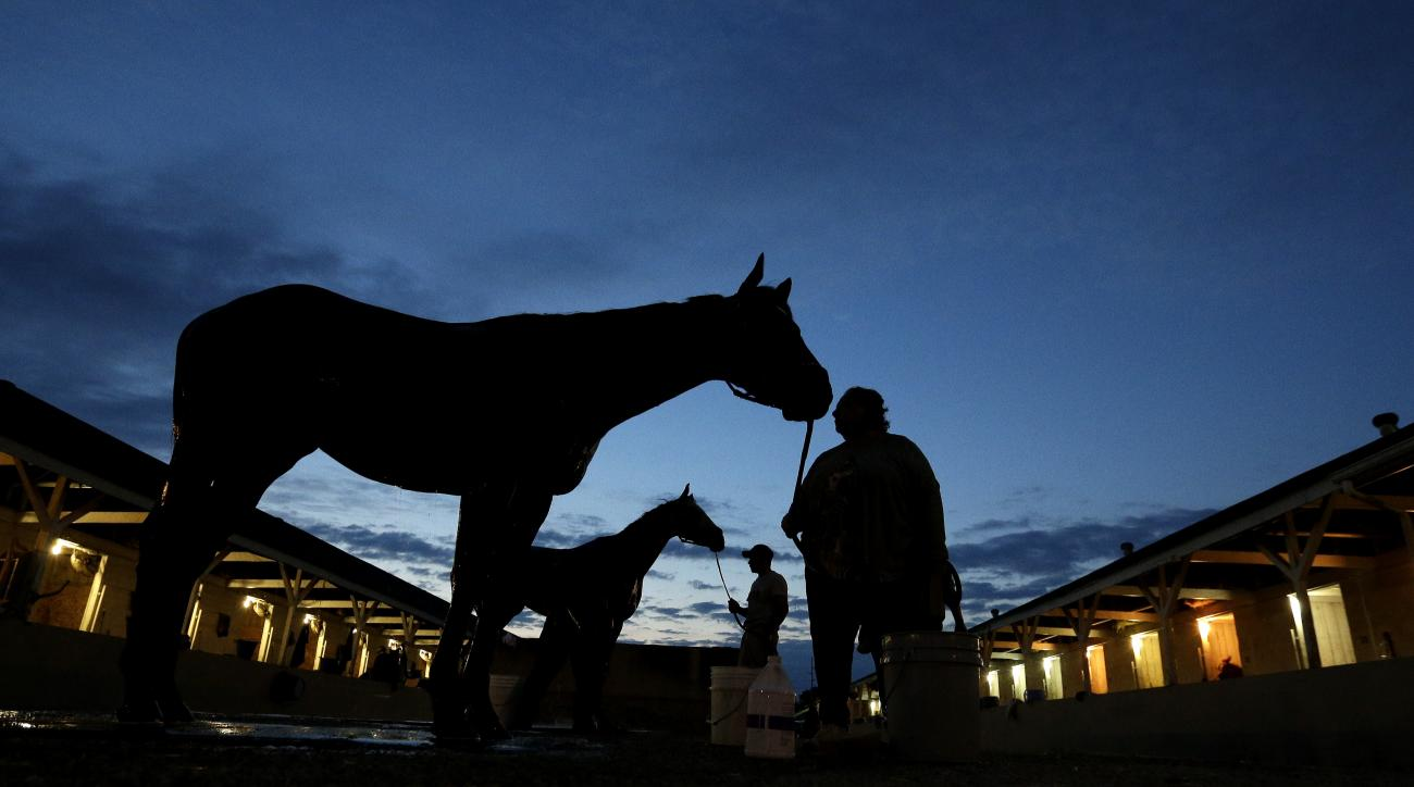Horses await baths after an early-morning workout at Churchill Downs Wednesday, May 4, 2016, in Louisville, Ky. The 142nd running of the Kentucky Derby is scheduled for Saturday, May 7. (AP Photo/Charlie Riedel)