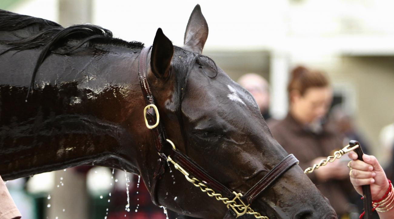 Kentucky Derby hopeful Mor Spirit reacts as he gets a bath outside Barn 33 at Churchill Downs in Louisville, Ky., Wednesday, May 4, 2016. The 142nd Kentucky Derby is Saturday, May 7. (AP Photo/Garry Jones)