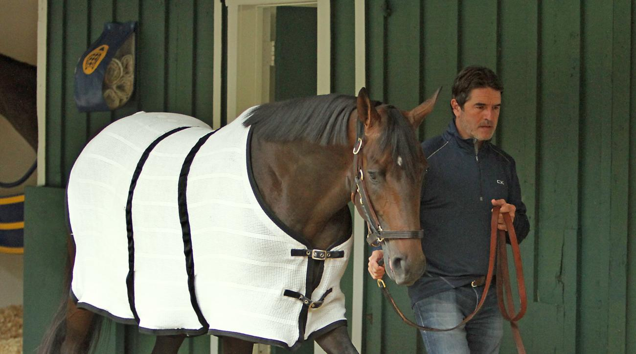 Trainer Keith Desormeaux walks Preakness Stakes hopeful Exaggerator in the stakes barn at Pimlico Race Course Wednesday, May 18, 2016,  in Baltimore following a morning jog. The 141st Preakness Stakes is scheduled for Saturday, May 21. (AP Photo/Garry Jon
