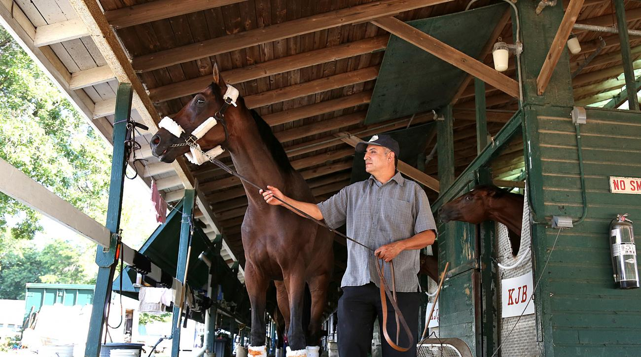 In a photo provided by Equi-Photo, Kentucky Derby champion Nyquist checks out his surroundings while walking around the barn with groom Elias Anaya after arriving at Monmouth Park in Oceanport, N.J., on Wednesday afternoon, July 27, 2016, following a flig