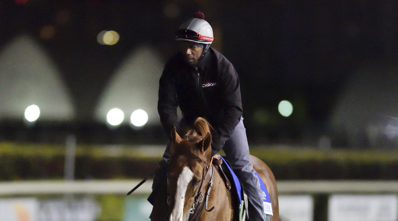 California Chrome participates in his first morning workout Sunday, Jan. 8, 2017, at Gulfstream Park ahead of the Pegasus World Cup in Hallandale Beach, Fla. The Pegasus World Cup will be held on Jan. 28. (Lauren King/Coglianese Photos via AP)