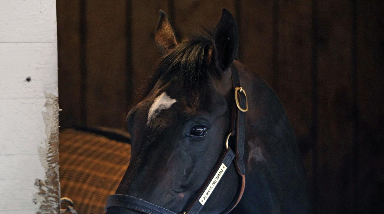Always Dreaming, winner of the 143rd Kentucky Derby 143 watches all the activity outside his Barn 40 stall at Churchill Downs in Louisville, Ky., Sunday, May 7, 2017. (AP Photo/Garry Jones)