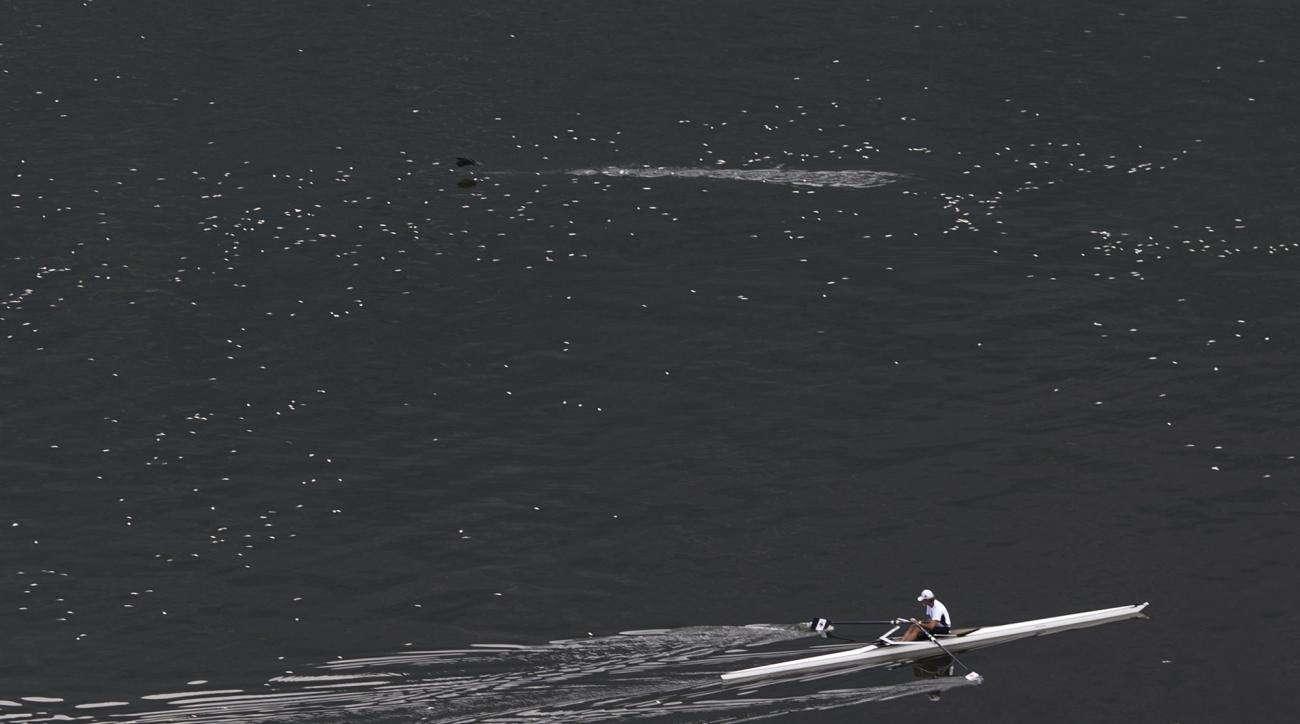 FILE - In this April 16, 2015 file photo, a man rows in the Rodrigo de Freitas lagoon, where Olympic rowing competitions are slated to be held during the 2016 games, surrounded by dead small silvery fish in Rio de Janeiro, Brazil. Matt Smith, the head of
