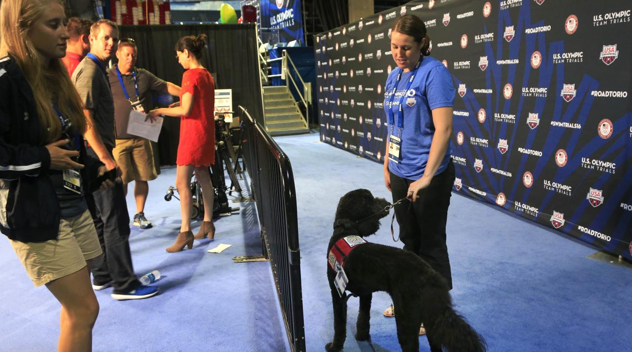 Larry, a goldendoodle, waits for athletes to arrive while working as a therapy dog at the U.S. Olympic swimming trials in Omaha, Neb., Wednesday, June 29, 2016. USA Swimming, in an effort to ease some of the anxiety accompanying such a major meet, has par