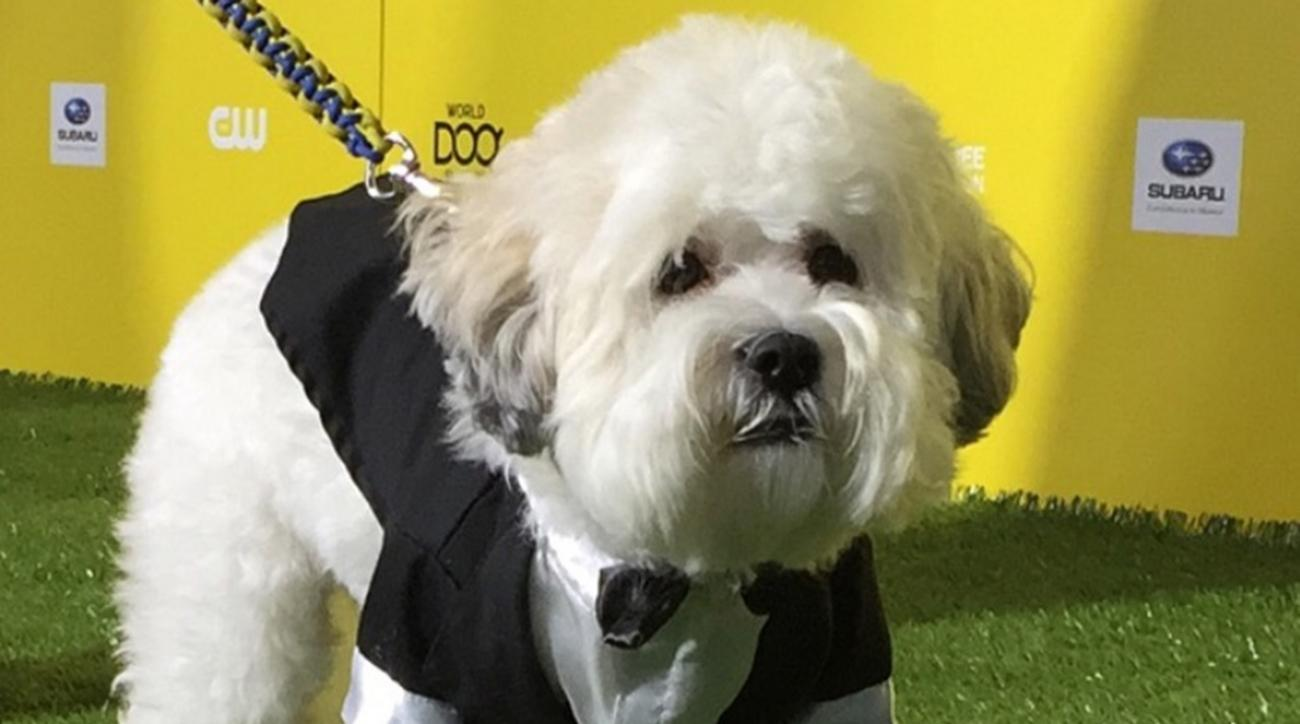 hank the dog world dog awards brewers