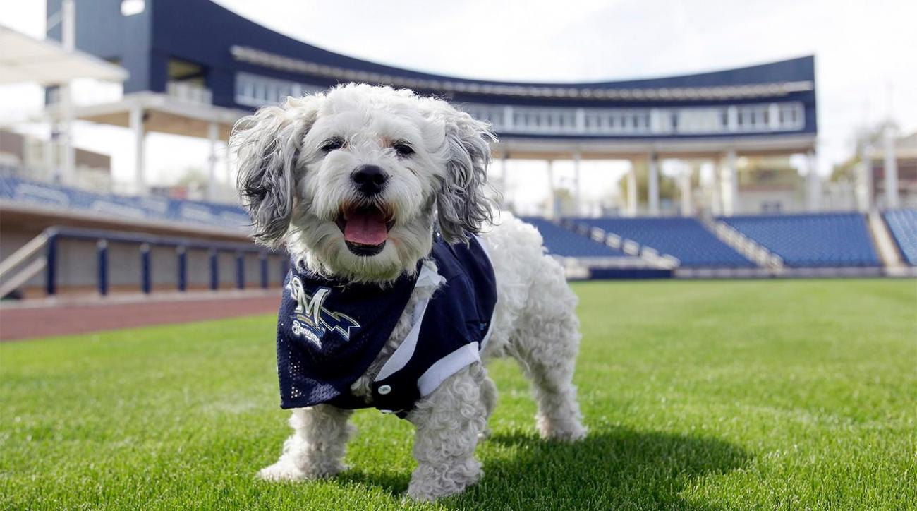 Is the Brewers mascot Hank the Dog an impostor?  IMAGE