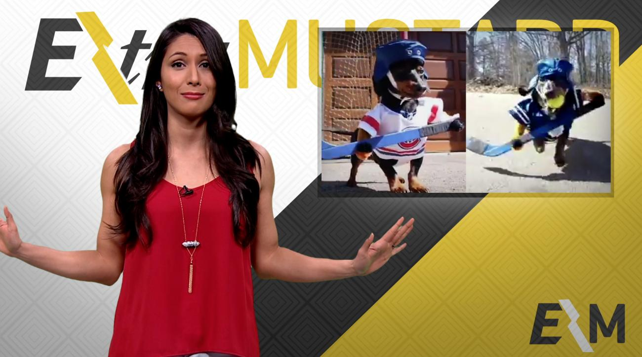 Mustard Minute: Two dachshunds play hockey dressed in Canadiens and Maple Leaf uniforms IMG