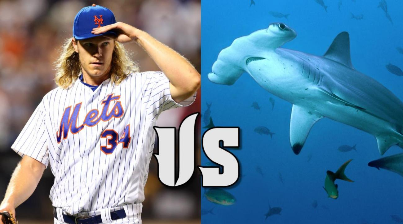Mustard Minute: Which ballplayers could beat a shark? The Cousteaus debate IMG