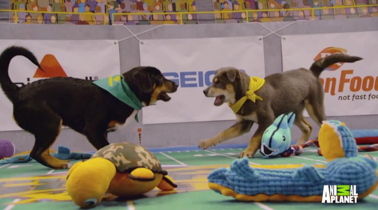 Puppy Bowl tug-of-war